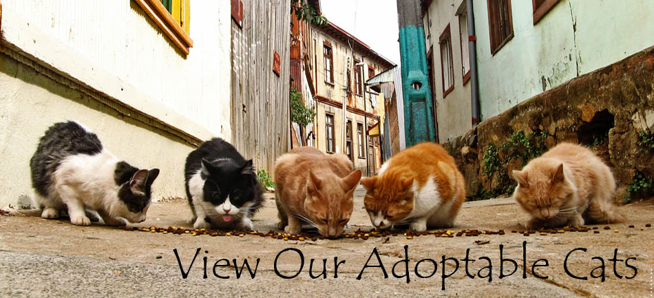 View Our Adoptable Cats